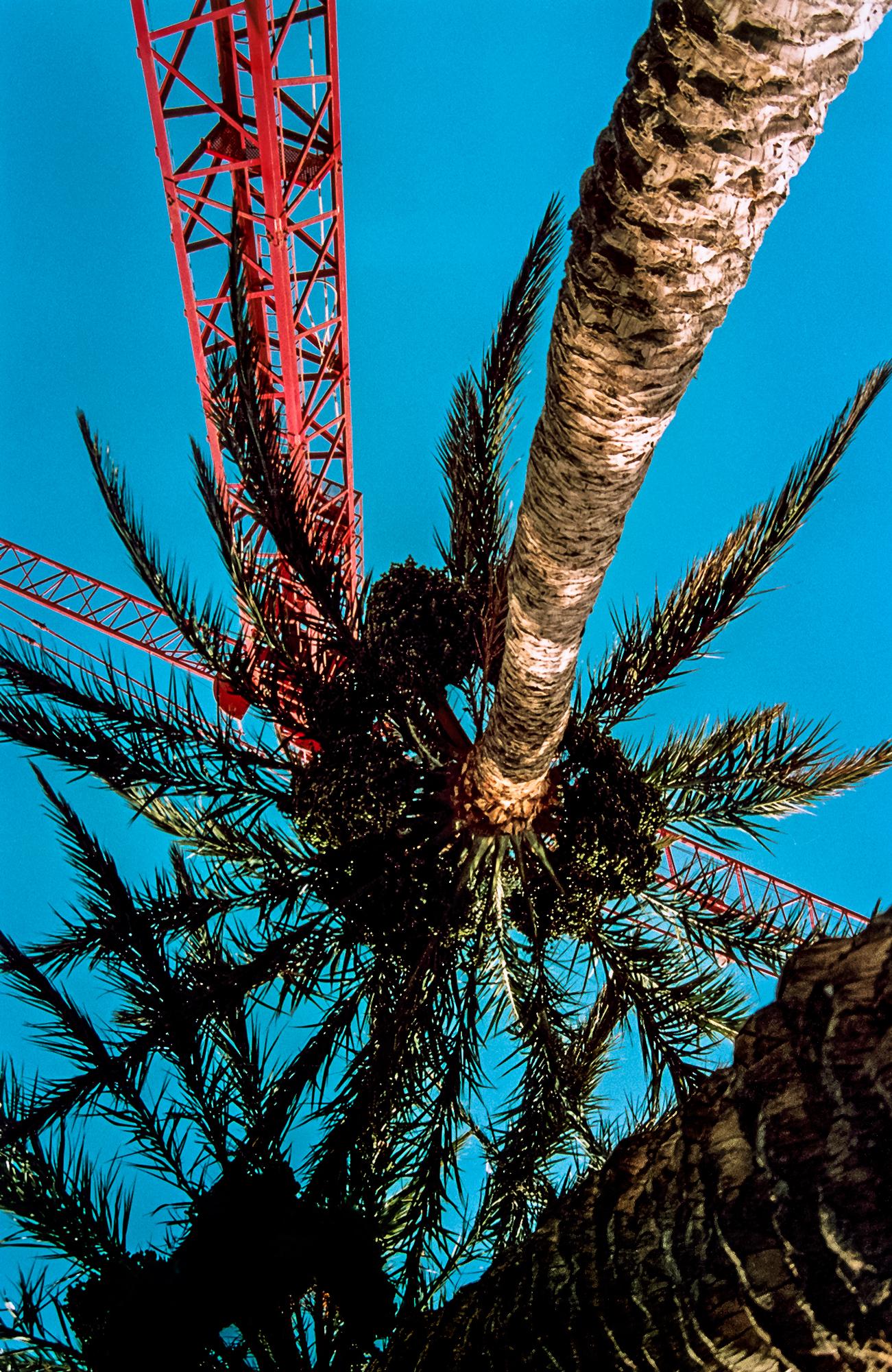 Magnolia Soto. Paraiso 3. 2002. Impresión fotográfica, 50 x 70 cm.