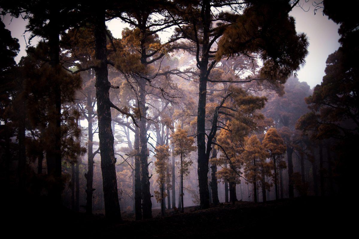 Magnolia Soto. Sin título 5. 2006. Fotografía Medidas variables.
